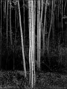 Photography by Ansel Adams available from Andrew Smith Gallery in Santa Fe