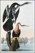 Leslie Hindman Auctioneers, print by John James Audubon