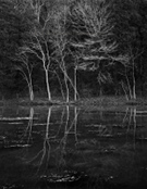 Artwork by Nicholas Bell, Reflecting Trees, available from Zatista.com