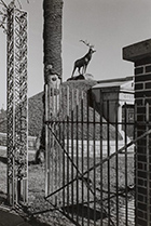 Photograph by Lee Friedlander in Lee Friedlander in Louisiana at New Orleans Museum of Art, April 27 – August 12, 2018