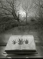 Artwork by Jerry Uelsmann at A Gallery for Fine Photography in New Orleans, Sept 7 - October 30, 2018, 092618