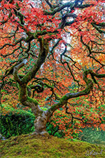 Photograph by Aaron Reed available directly from the artist, 090820