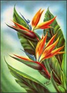 Prints by Ted Mundorff available from Lahaina Printsellers in Lahaina, HI